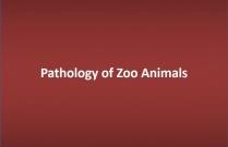 Pathology of Zoo Animals
