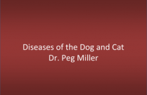 Gross-Pathology of the Dog and Cat - Dr. Peg Miller
