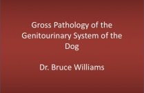 Pathology of the Genitourinary System of the Dog