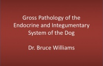 Gross Path of the Endocrine and Integumentary Systems of the Dog