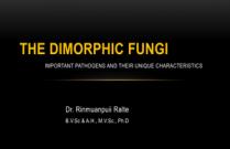 The Dimorphic Fungi