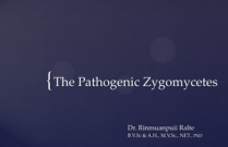 The Pathogenic Zygomycetes