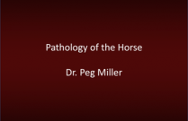 Pathology of the Horse - Dr. Peg Miller