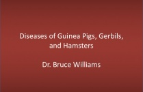 Pathology of Guinea Pigs, Hamsters, and Gerbils