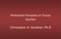 Protozoan Parasites in Tissue Section