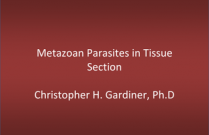 Metazoan Parasites in Tissue Section