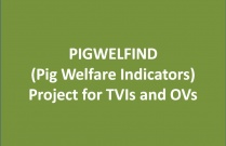 Pigwelfind (Pig Welfare Indicators) Project for TVIs and OVs