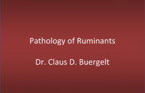Pathology of Ruminants