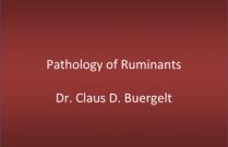Pathology of Ruminants
