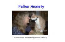 Feline Anxiety