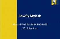 Bowfly Myiasis