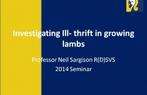 Investigating Ill- thrift in growing lambs