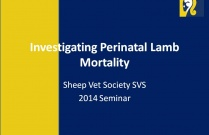 Investigating Perinatal Lamb Mortality