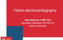 Feline Electrocardiography