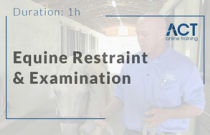 Equine Restraint and Examination