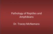 Pathology of Reptiles and Amphibians