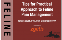Tips for a Practical Approach to Feline Pain Management