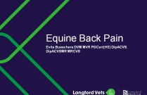 Equine Back Pain