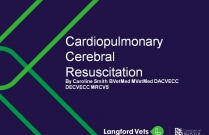 Cardiopulmonary Cerebral Resuscitation