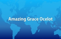 Amazing Grace Ocelot