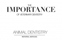 The Importance of Veterinary Dentistry