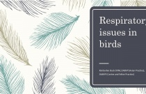 Respiratory Issues in Birds