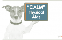 Calming Tools for Fear and Anxiety Disorders in Dogs: Physical Aids
