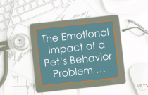 The Emotional Impact of a Pet's Behavior Problem on the Caregiver - Aggression