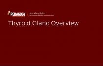 Thyroid Gland Overview