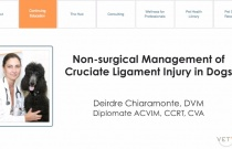 Non-surgical Management of Cruciate Ligament Injury in Dogs