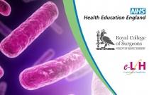 Innate And Adaptive Immunity