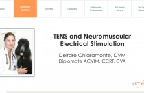 TENS and Neuromuscular Electrical Stimulation