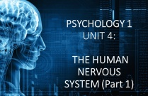 PSYCHOLOGY 1 UNIT 4: THE HUMAN NERVOUS SYSTEM (Part 1)