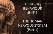 DRUGS & BEHAVIOUR UNIT 1: THE HUMAN NERVOUS SYSTEM (Part 1)