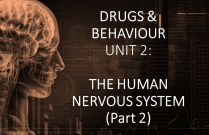 DRUGS & BEHAVIOUR UNIT 2: THE HUMAN NERVOUS SYSTEM (Part 2)