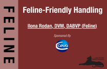 Feline-Friendly Handling