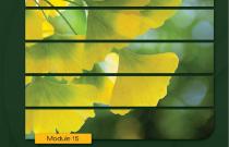 Alternative Treatments: Kidney School Module 15