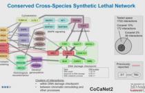 Combinatorial CRISPR-Cas9 screens for de novo mapping of genetic interactions