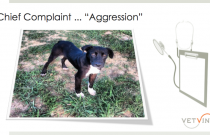 Fear-Based Aggression in Dogs