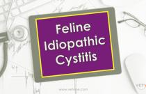 Feline Idiopathic Cystitis - Part I