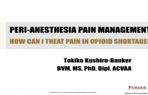 Peri-Anesthesia Pain Management: How Can I Treat Pain with the Opioid Shortage?