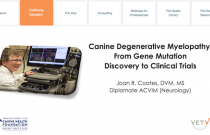 Canine Degenerative Myelopathy: From Gene Mutation Discovery to Clinical Trials
