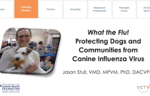 What the Flu! Protecting dogs and communities from canine influenza virus