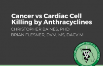 Cancer vs Cardiac Cell Killing by Anthracyclines