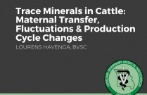 Trace Minerals In Cattle: Maternal Transfer, Fluctuations and Production Cycle Changes