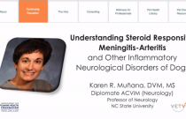 Understanding Steroid Responsive Meningitis-Arteritis and Other Inflammatory Neurological Disorders in Dogs