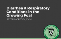 Diarrhea and Respiratory Conditions in the Growing Foal