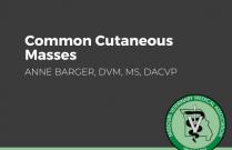 Common Cutaneous Masses