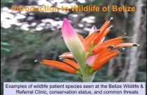 Introduction to Wildlife in Belize