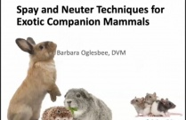 Spay and Neuter Techniques for Exotic Companion Animals